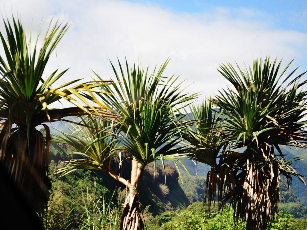 LA RÉUNION – L'île Intense – côté Végétation